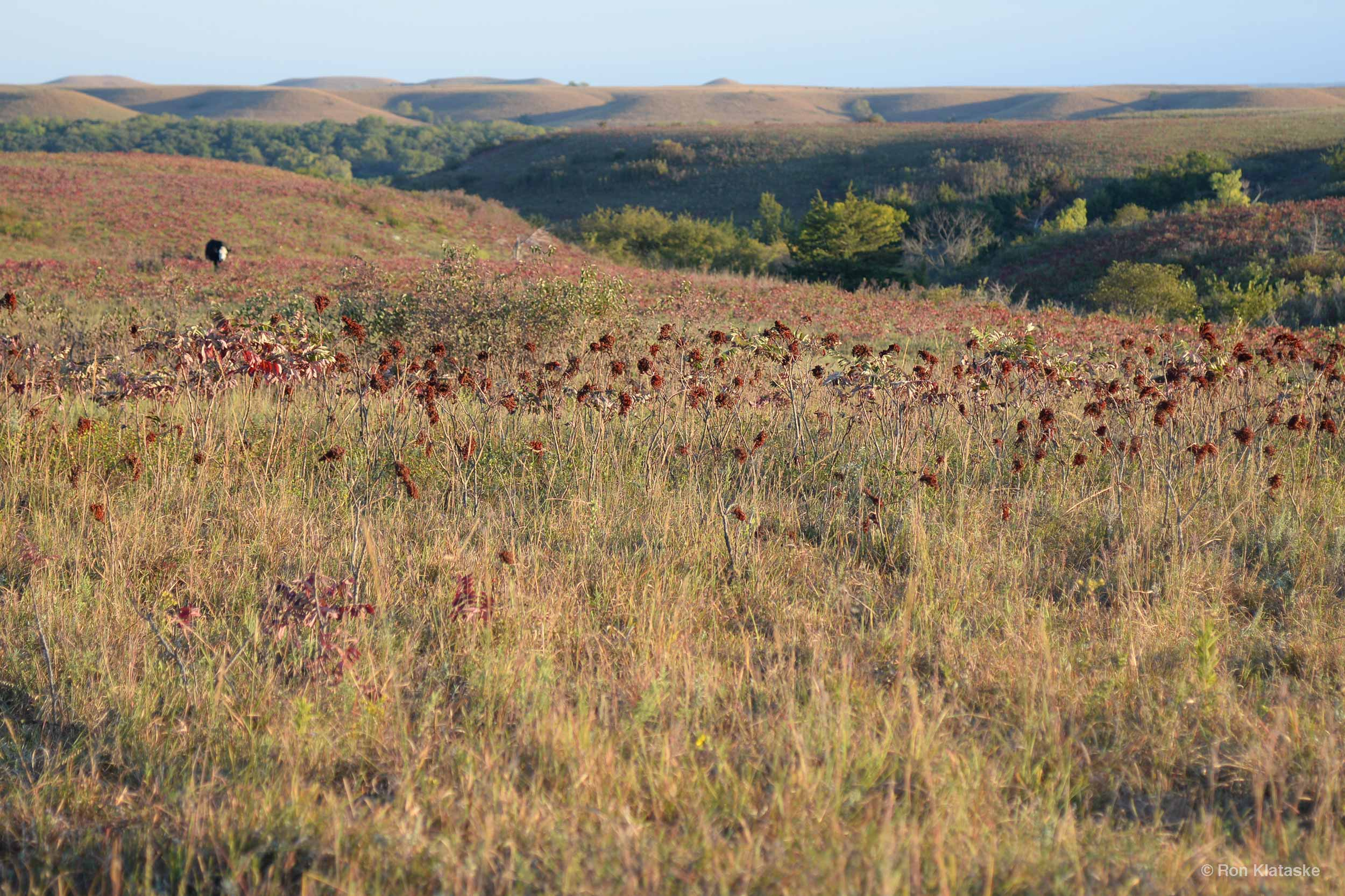 Conservation Easement in the Flint Hills. Photo by Ron Klataske