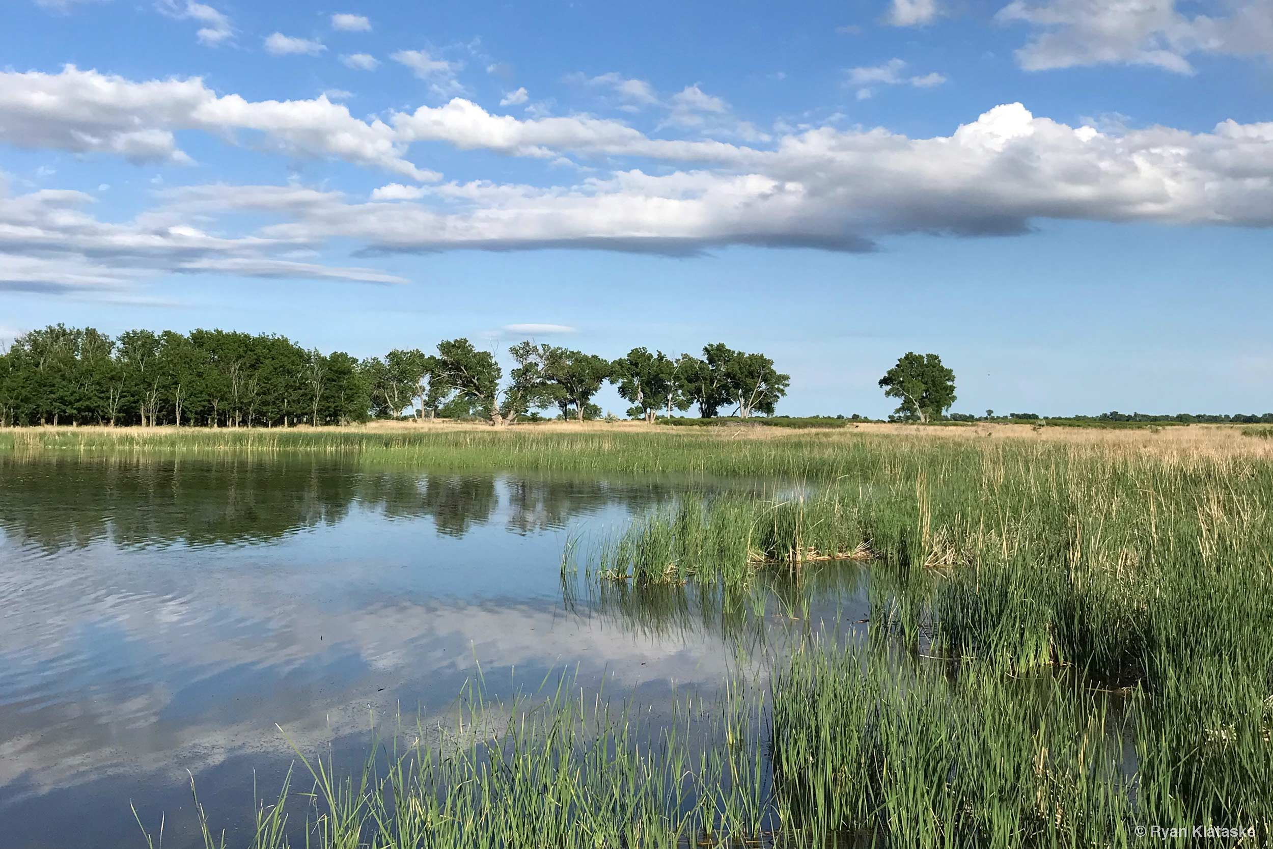 The future of Quivira National Wildlife Refuge is in peril. We need leaders that support restoring senior water rights. Photo by Ryan Klataske.
