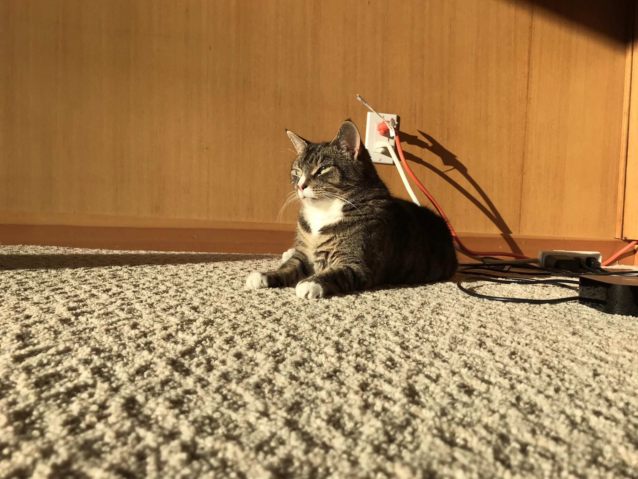 Cat, 2018