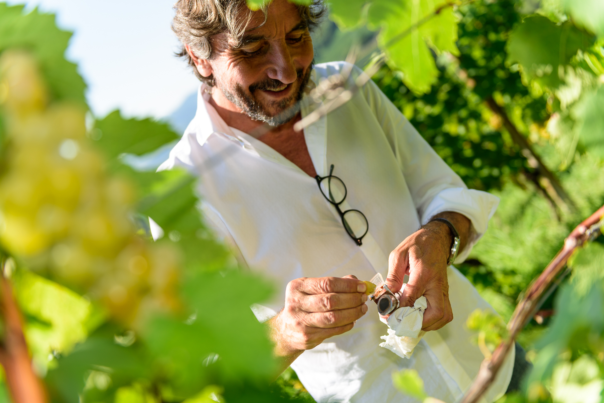 Giorgio harvest 9.png