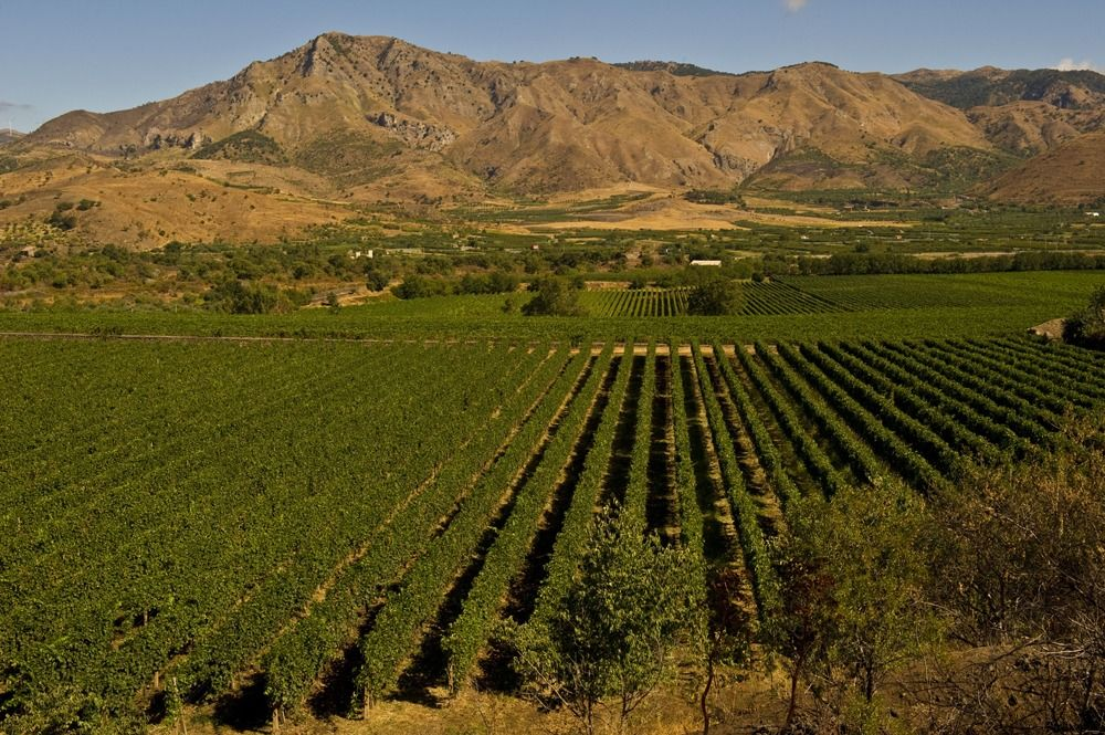 Cottanera vineyard.jpg