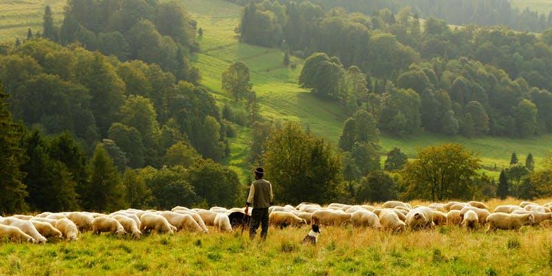Shepherd.jpeg