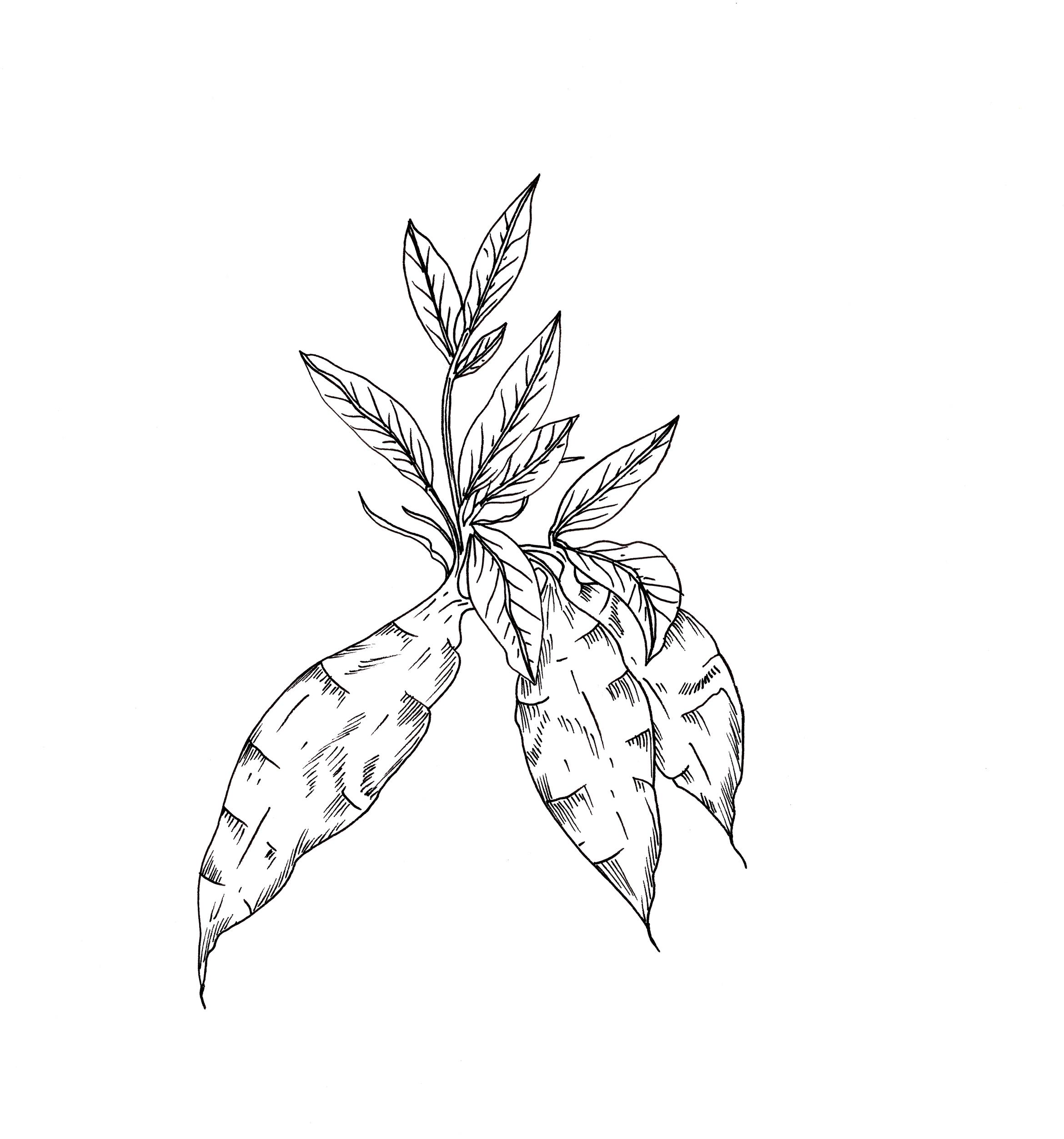 Arrow-Roots.jpg