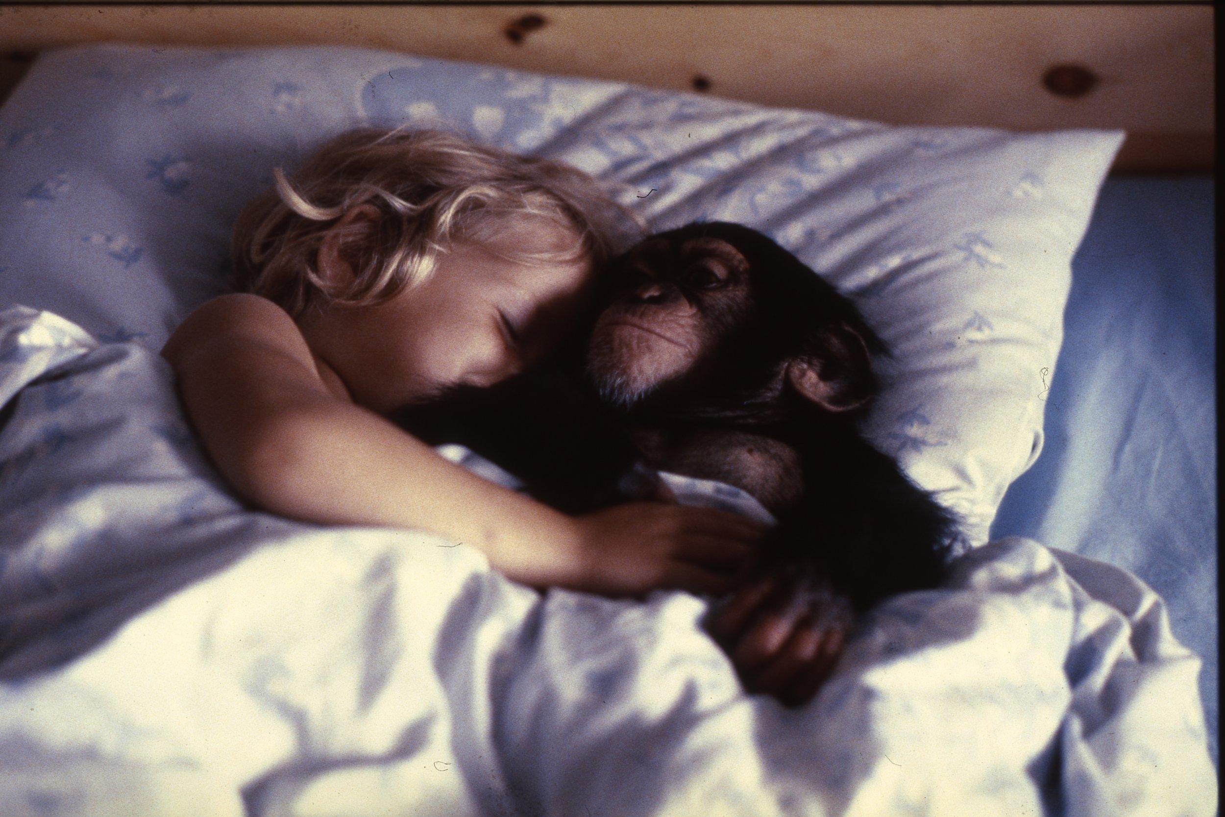 Her kommer Julius - Fortellingen om Norges mest berømte apekatt er først og fremst en fortelling om menneskets evige søken etter å forstå seg selv.