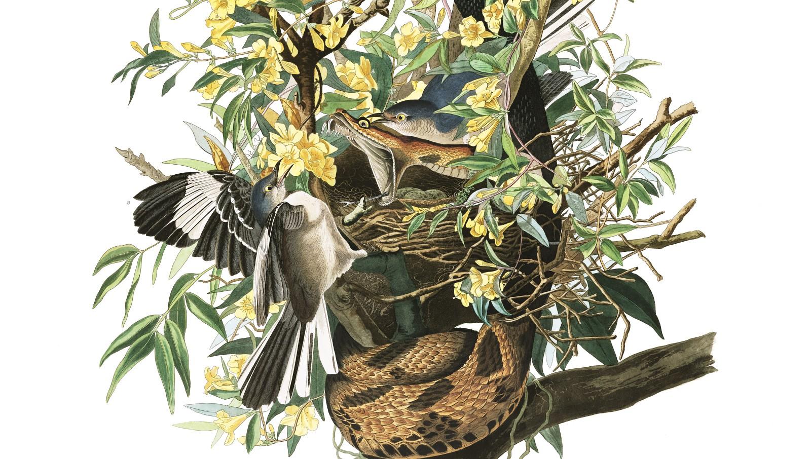 En fuglefangers triumf -