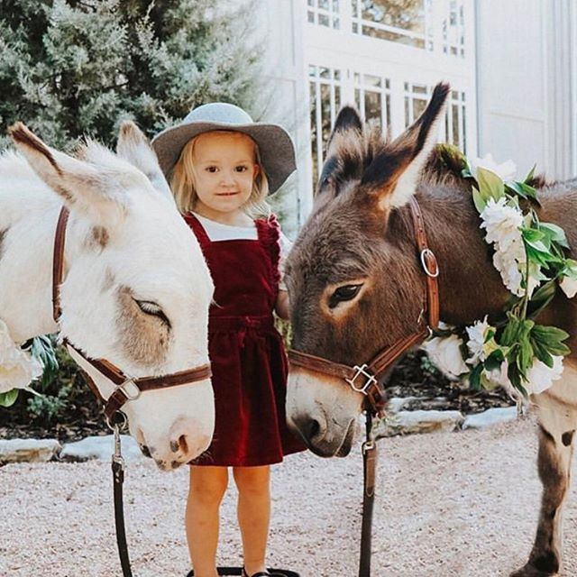Sweet baby and her burros! The barn at @theaddisongrove was the perfect backdrop for @eclecticstillsphotography and @melaniewrightphotography's family photo shoot 💕💕#beerburros #beerburrowedding #hillcountryweddings #hillcountryweddingvenue #livingmybestlife