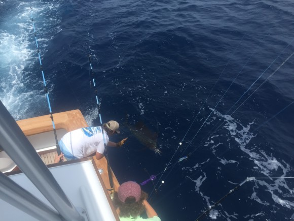 7416-sailfish3-580x435.jpg