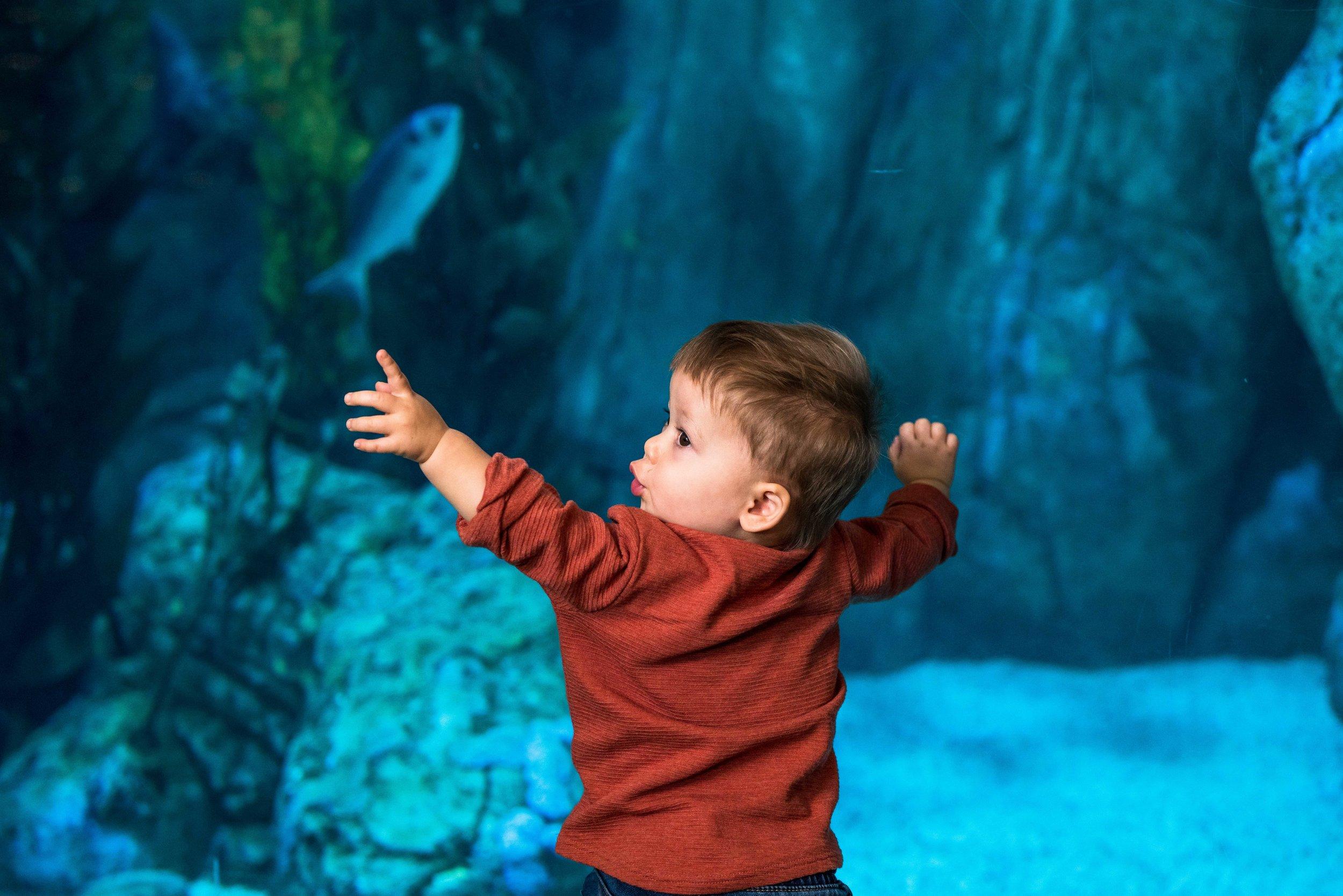ESW_12.02.18_Aquarium-4.jpg