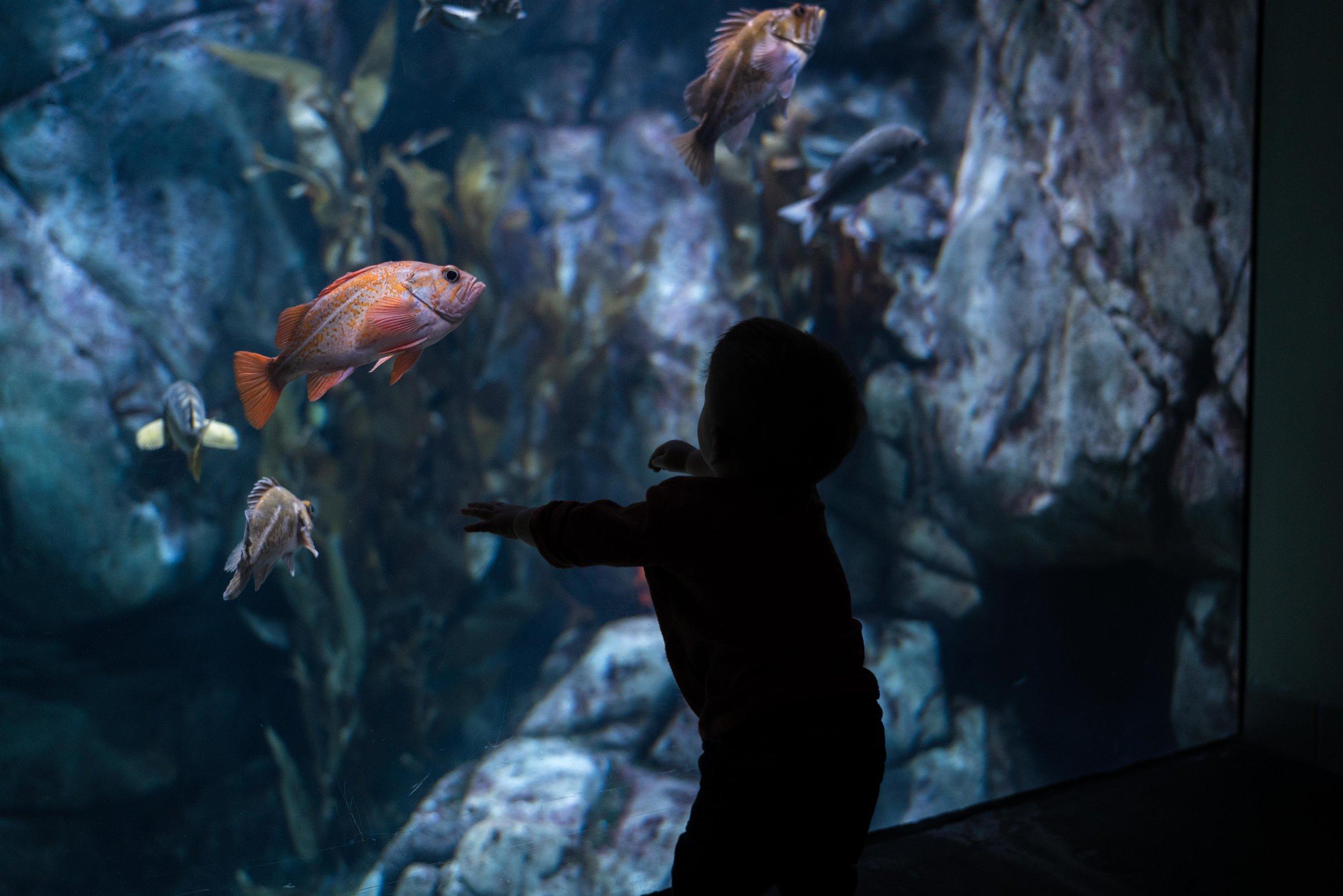 ESW_12.02.18_Aquarium-6.jpg