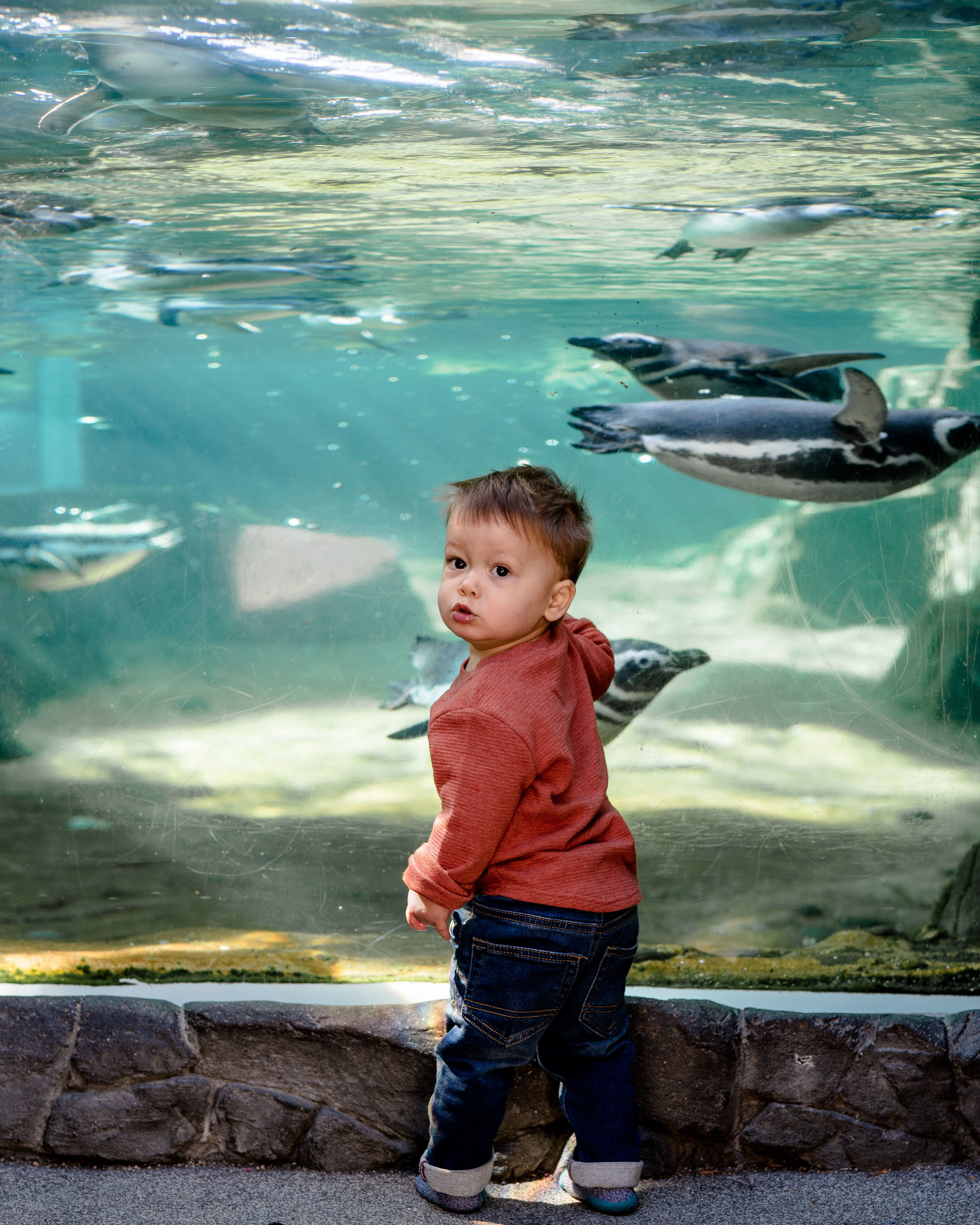 ESW_12.02.18_Aquarium-16.jpg
