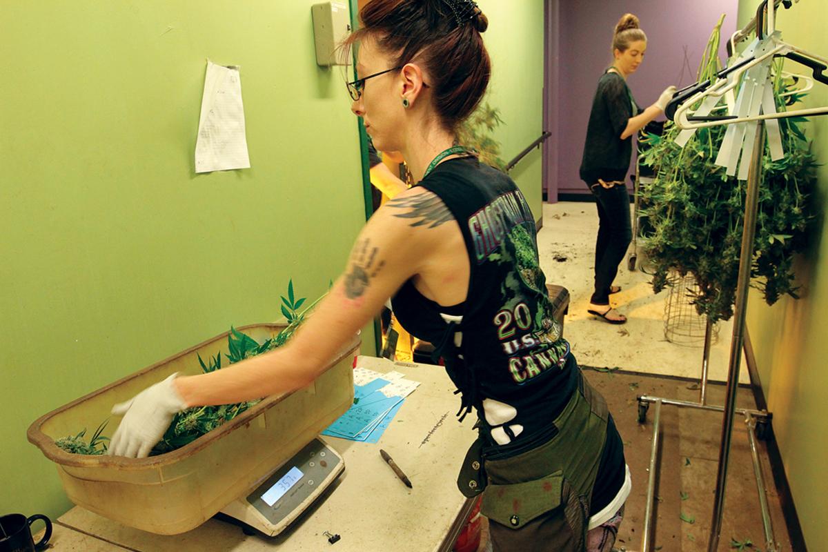 Women in Cannabis - Photo:  Green Man Cannabis