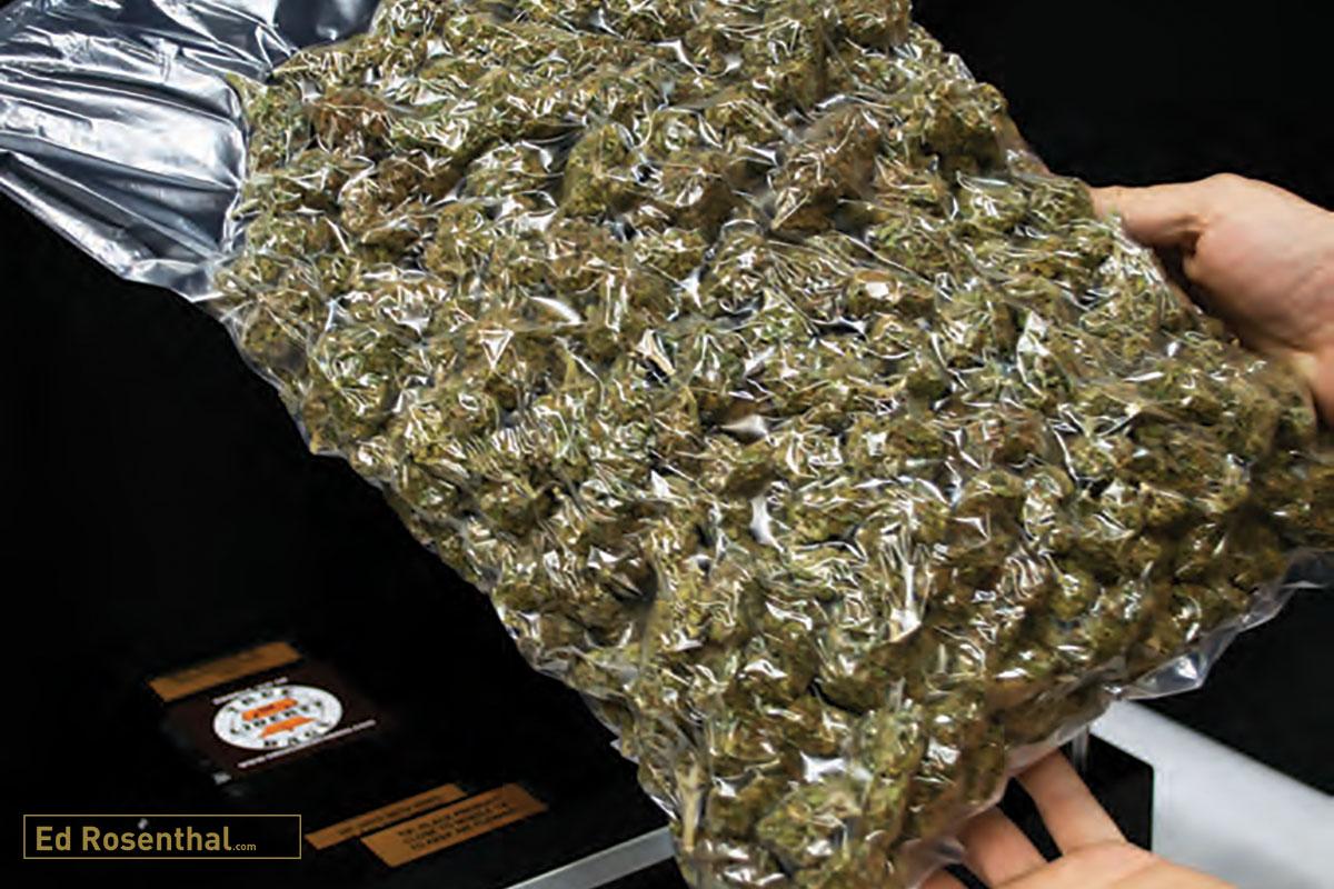 vacuum-packaged-cannabis-ed-rosenthal.jpg