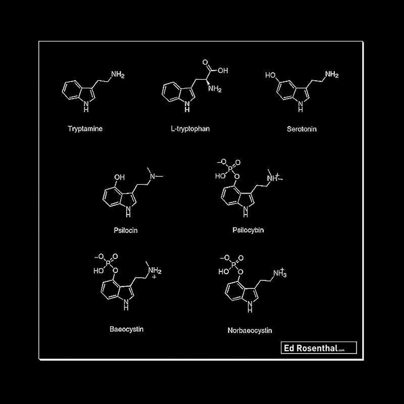 Mushroom chemical composition.