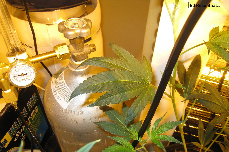 Indoor Co2 tank.