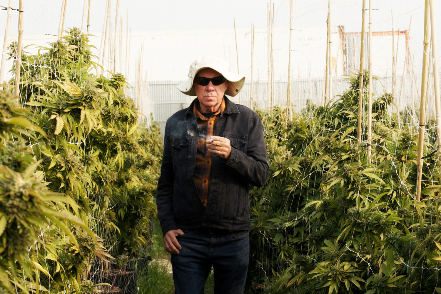 It wasn't long ago that the idea of growing an acre of marijuana outdoors, in an urban area, was just a fantasy.