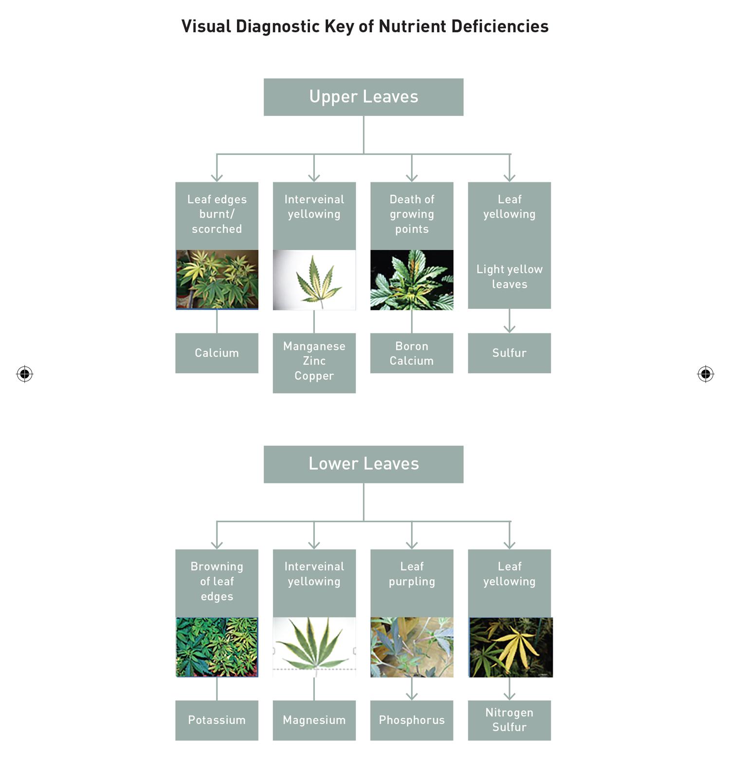 Visual-Diagnostic-Key.jpg