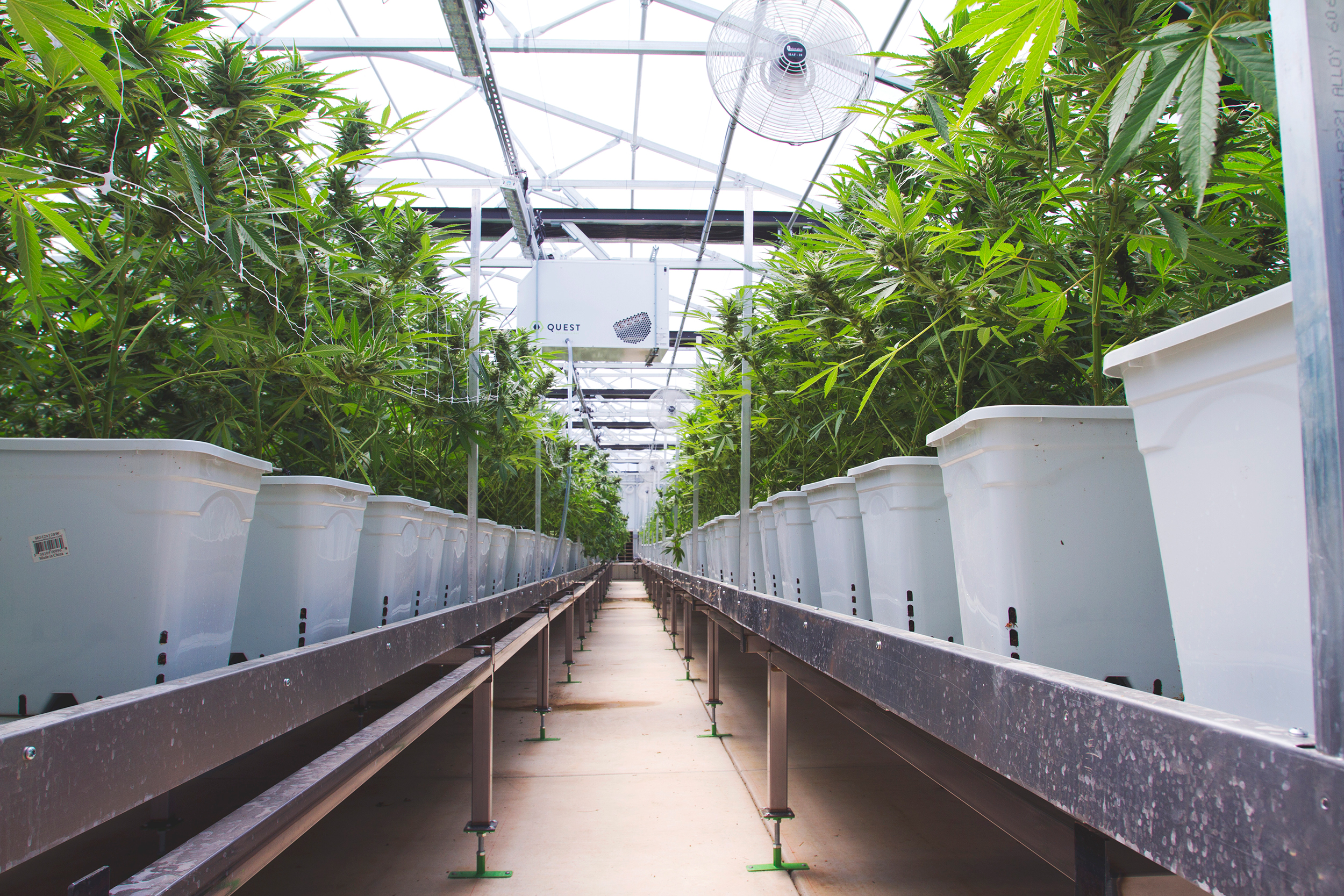 Gro-Tech Systems : Cannabis plants growing in light dep greenhouse