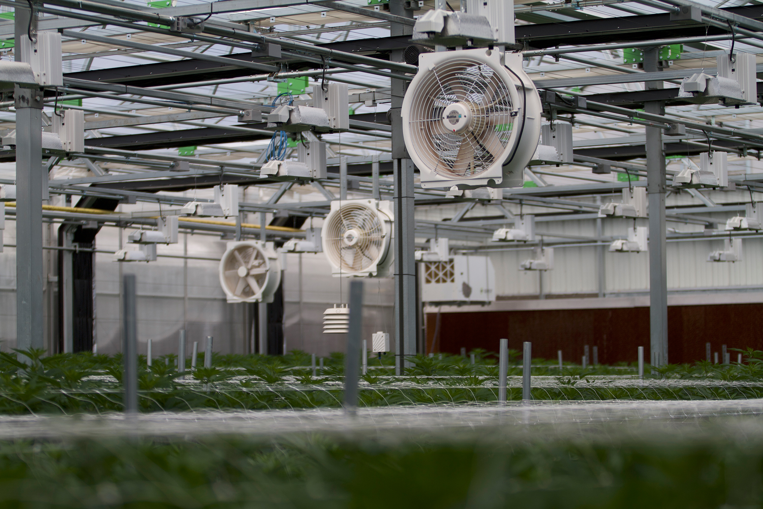 Interior cannabis plants in light dep greenhouse by  Gro-Tech Systems
