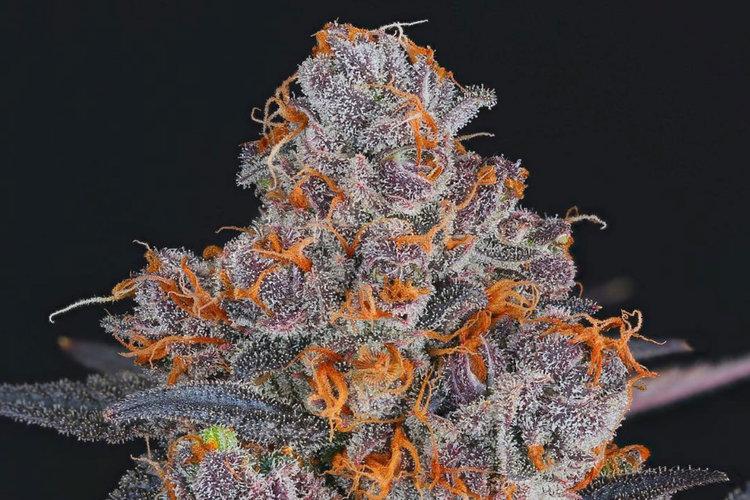 Beautiful cannabis bud by Professor P.  Dyntasty Genetics .
