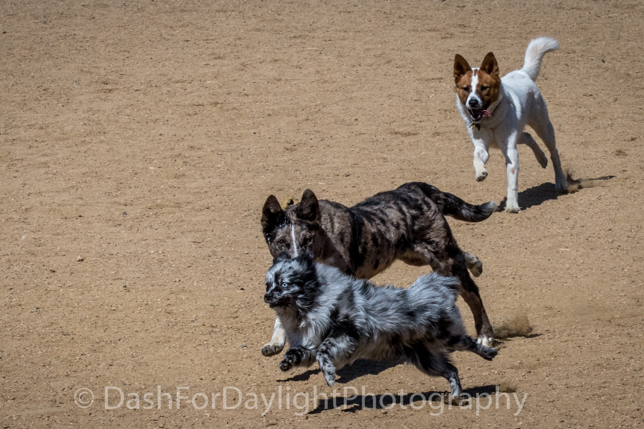 DSC_1388 Small Dogs Fly too