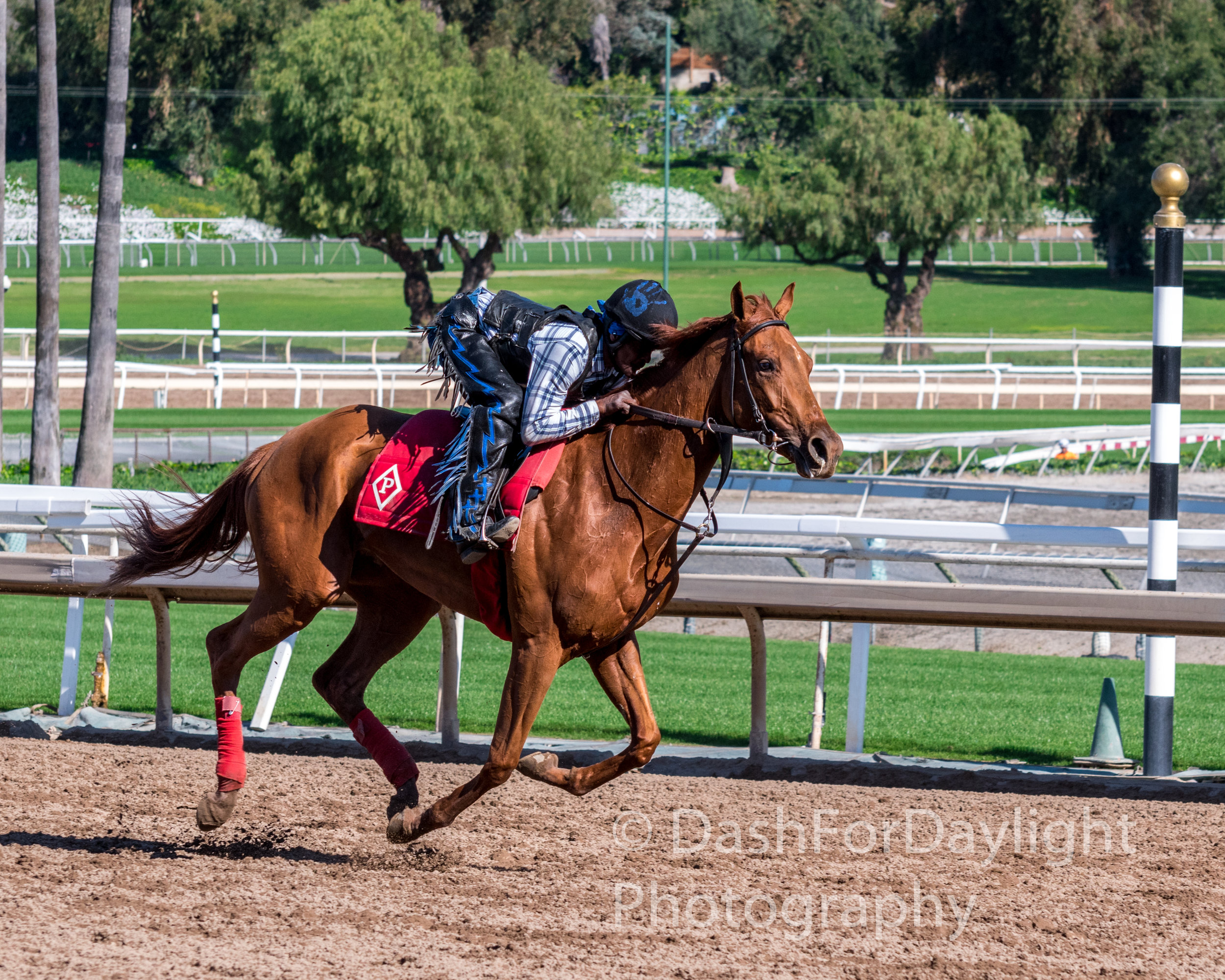 DSC_0535 Breezing Chestnut at Santa Anita