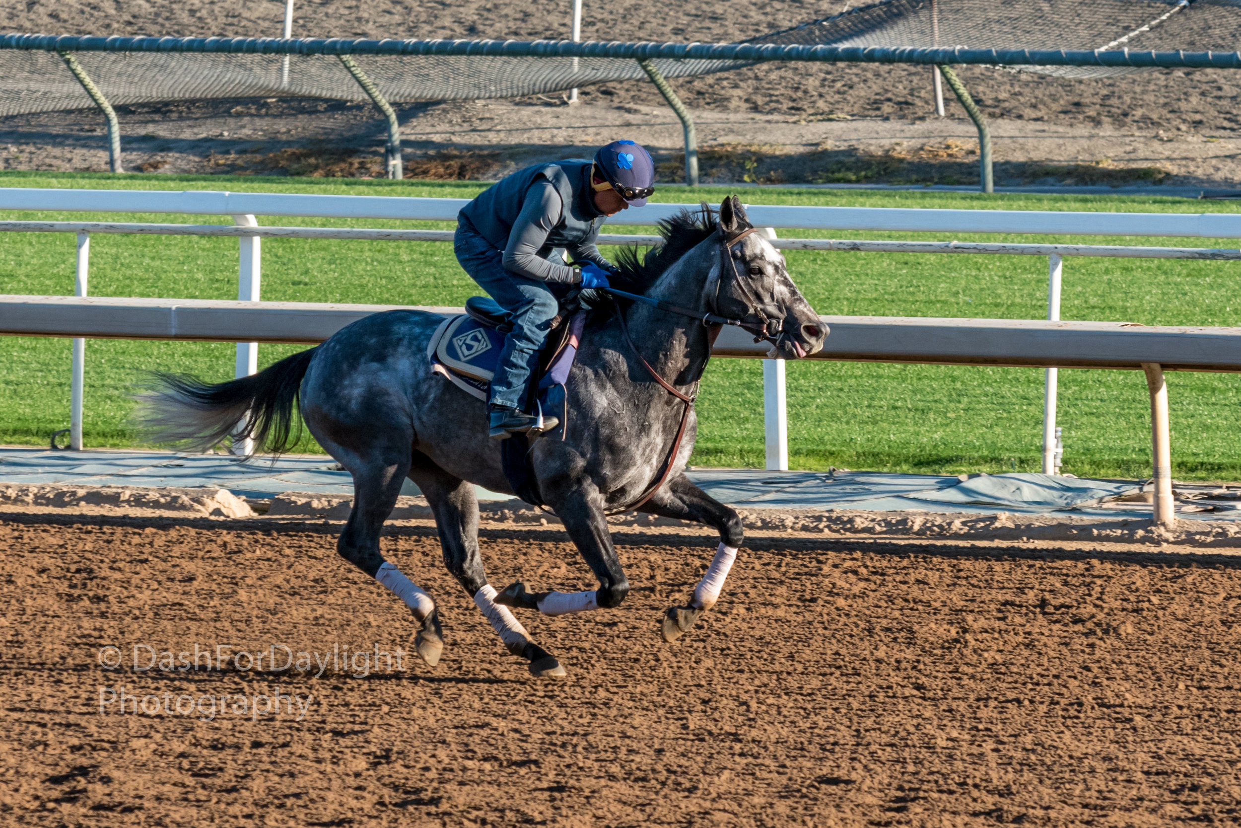 DSC_0290 Grey Working at Santa Anita