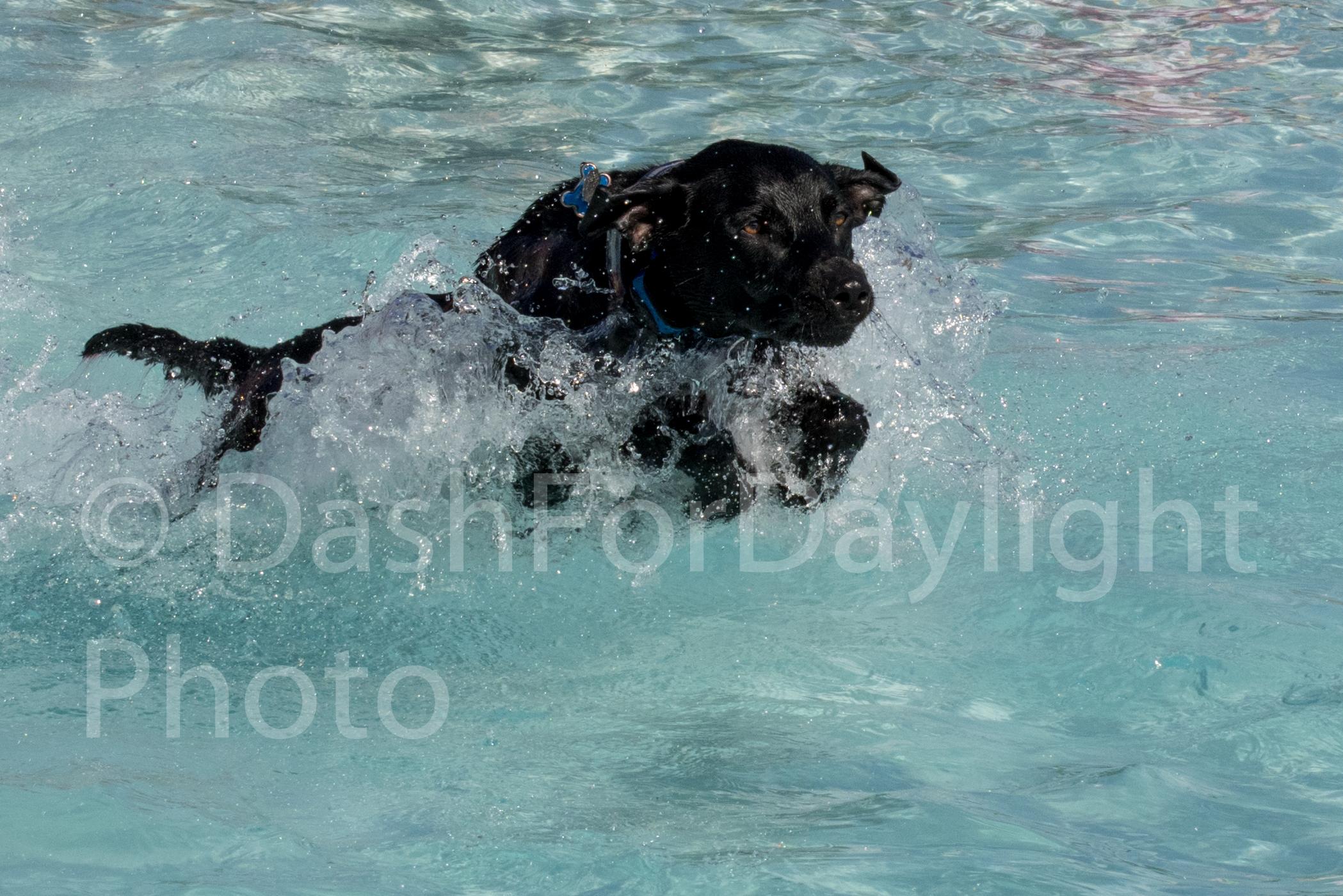#1131 Bounding in Water