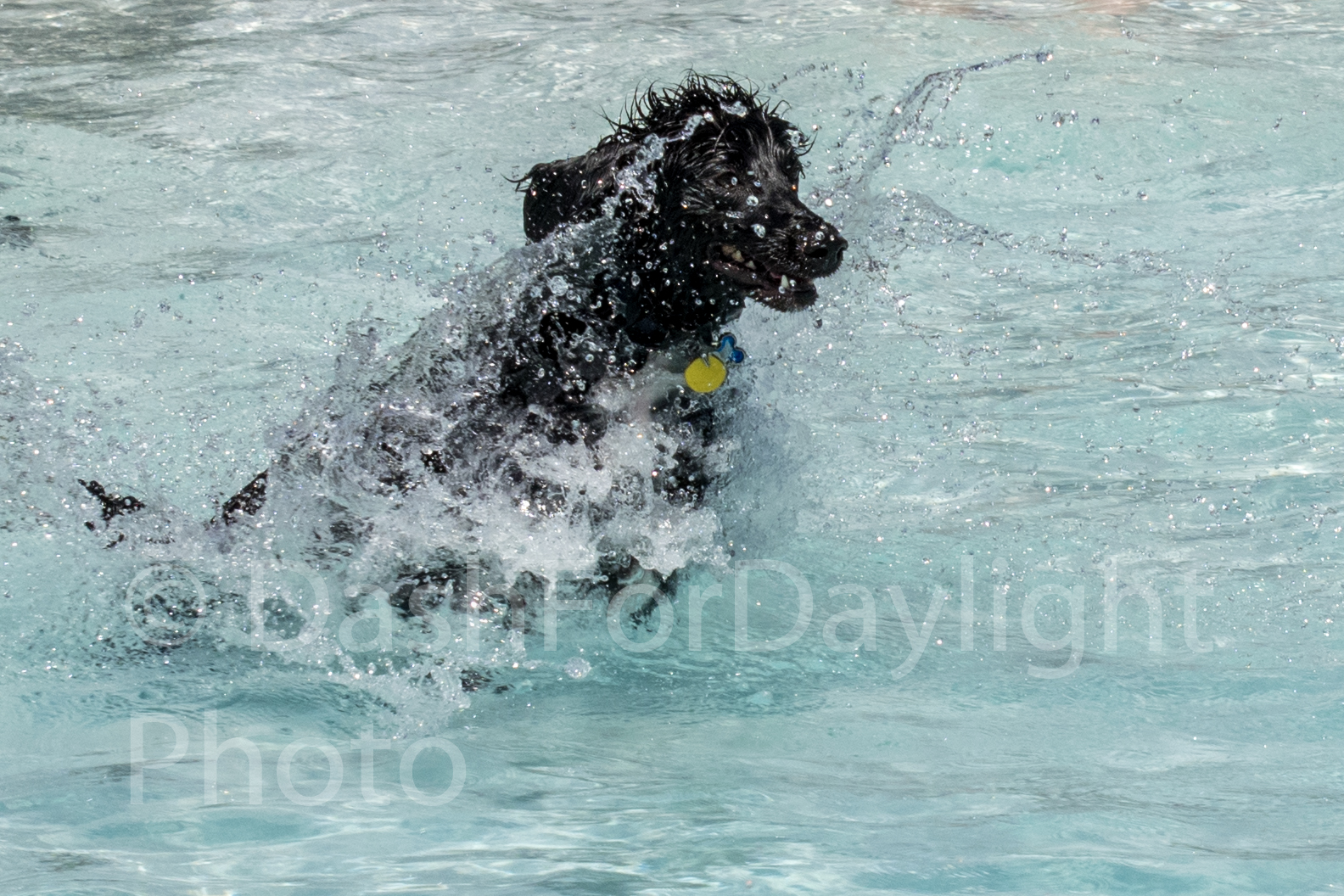 #1299 Zeke Emerging out of the Water