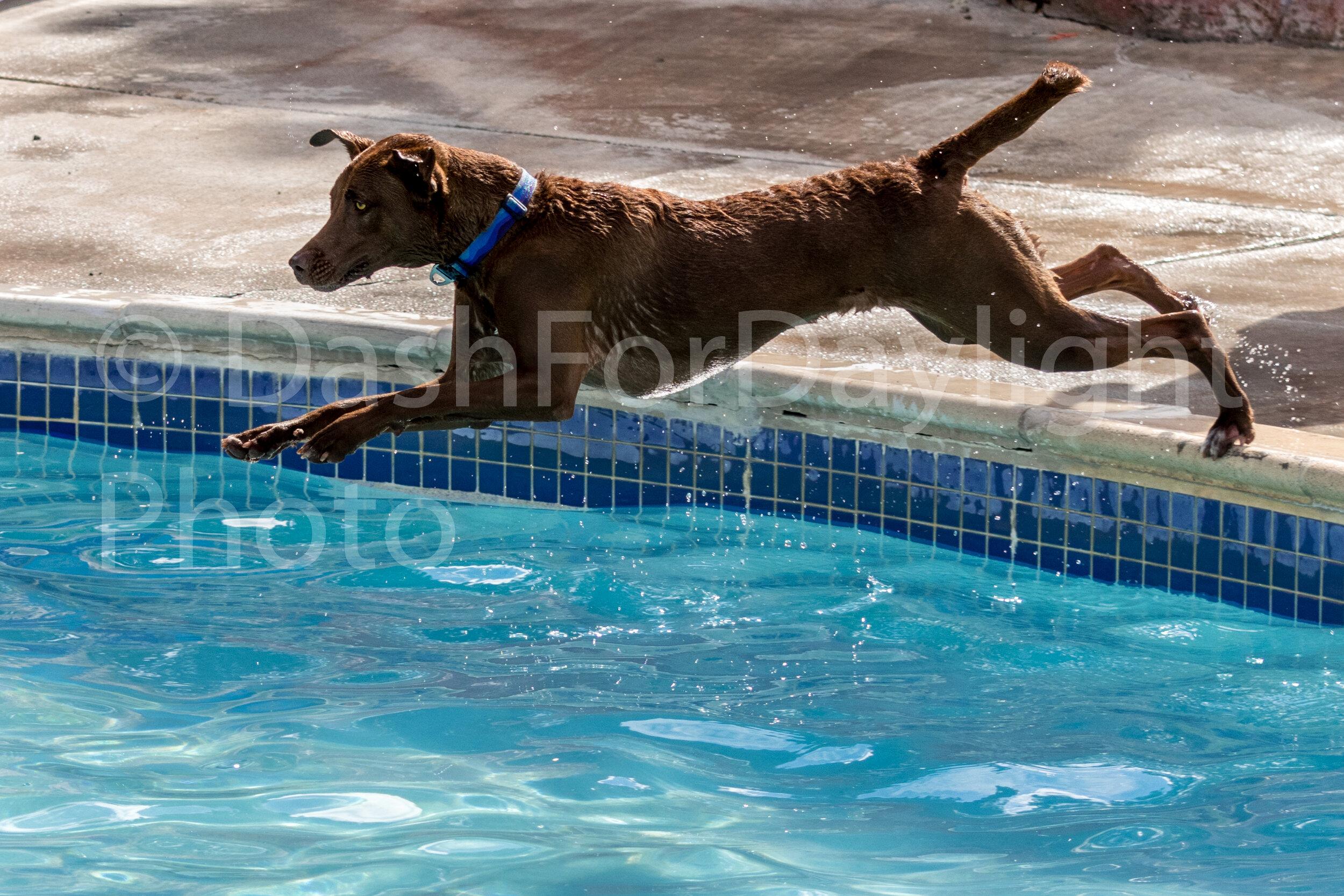 #1467 Jasper Dives In