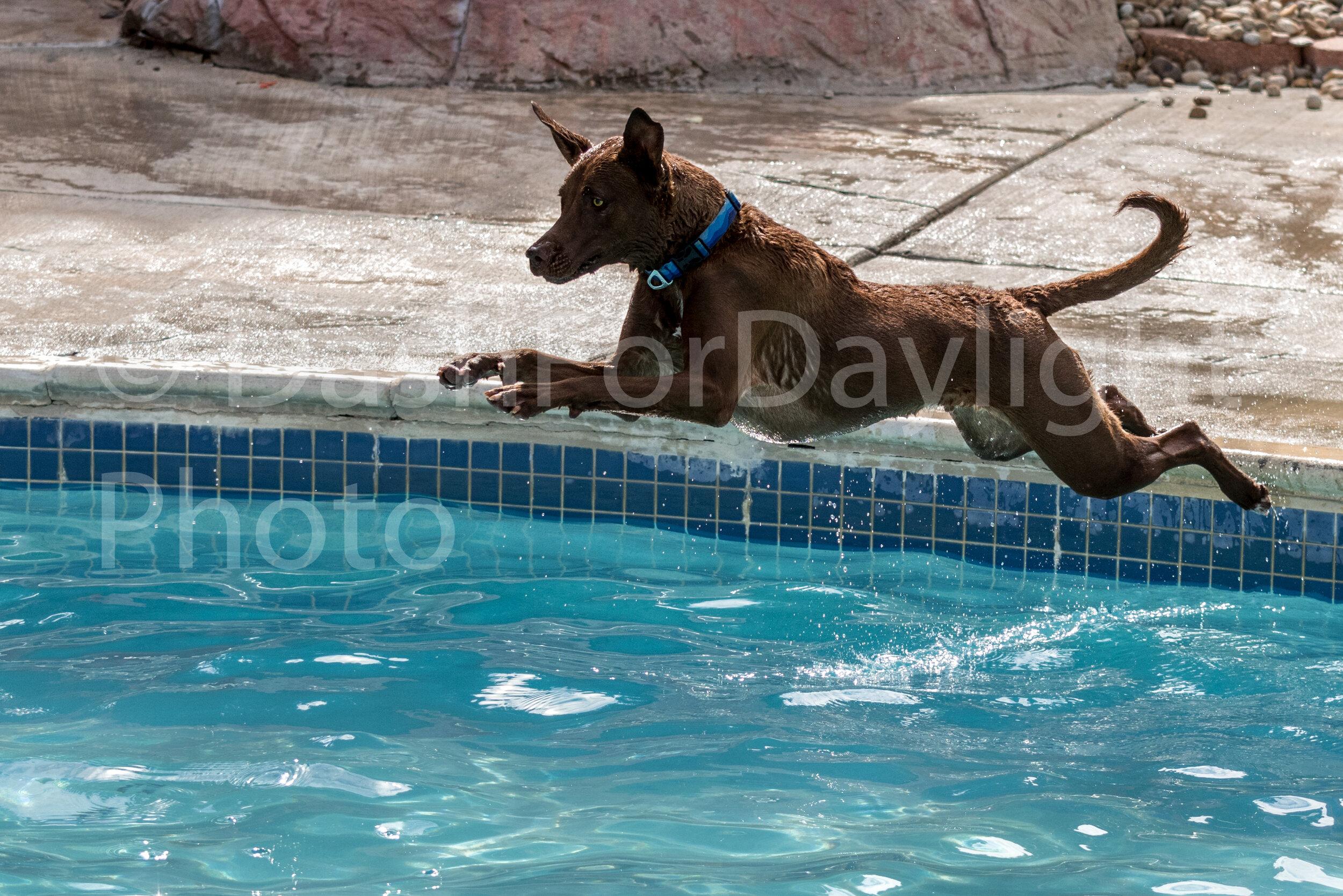 #1457 Jasper Takes Flight