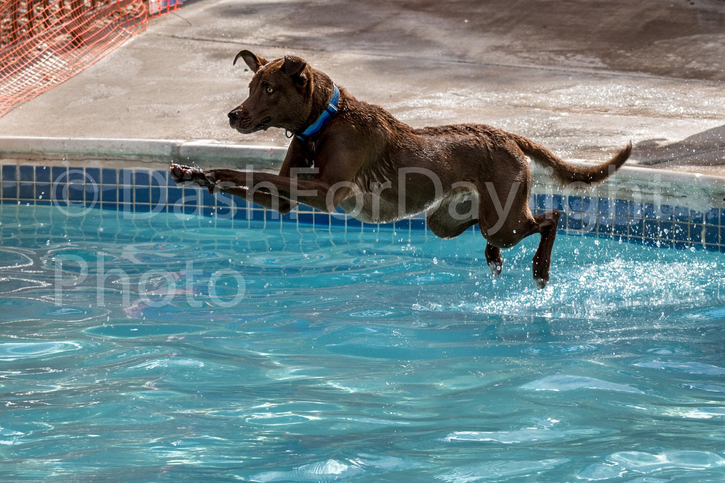#1466 Jasper Glides through the Air