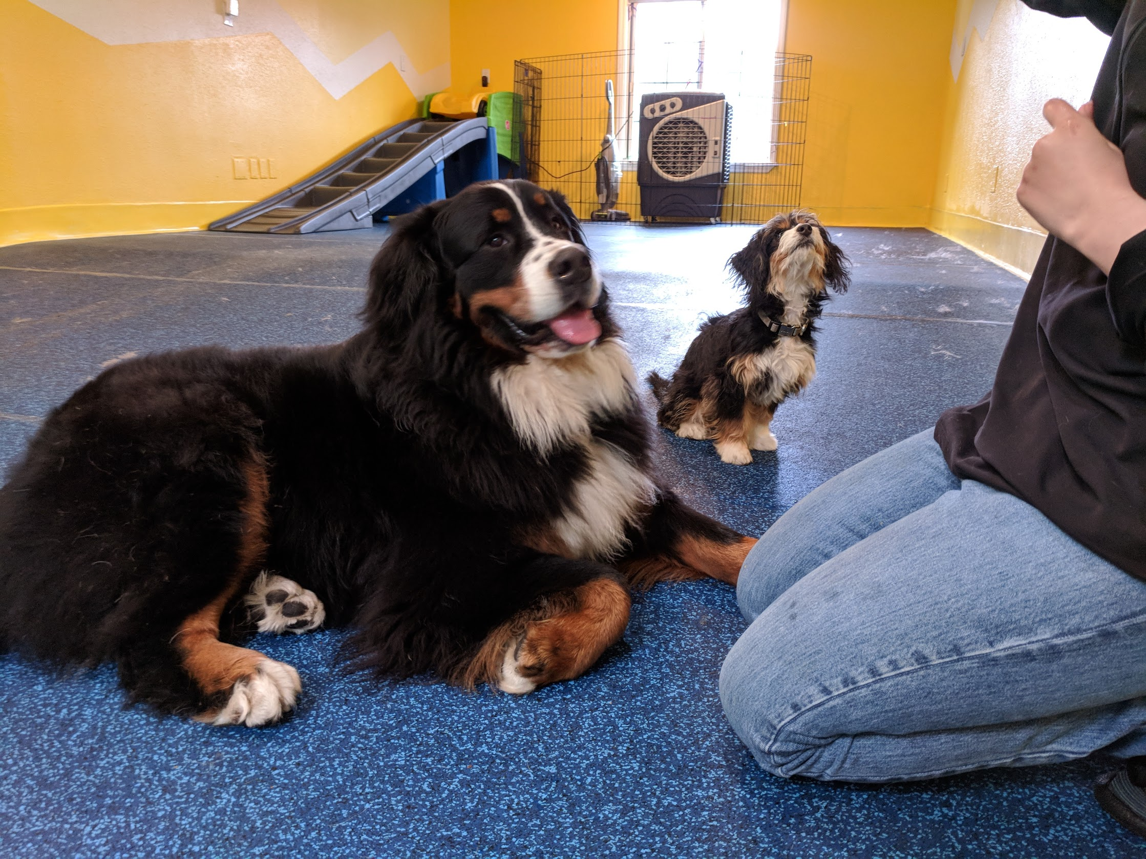 Canine Specialist  -