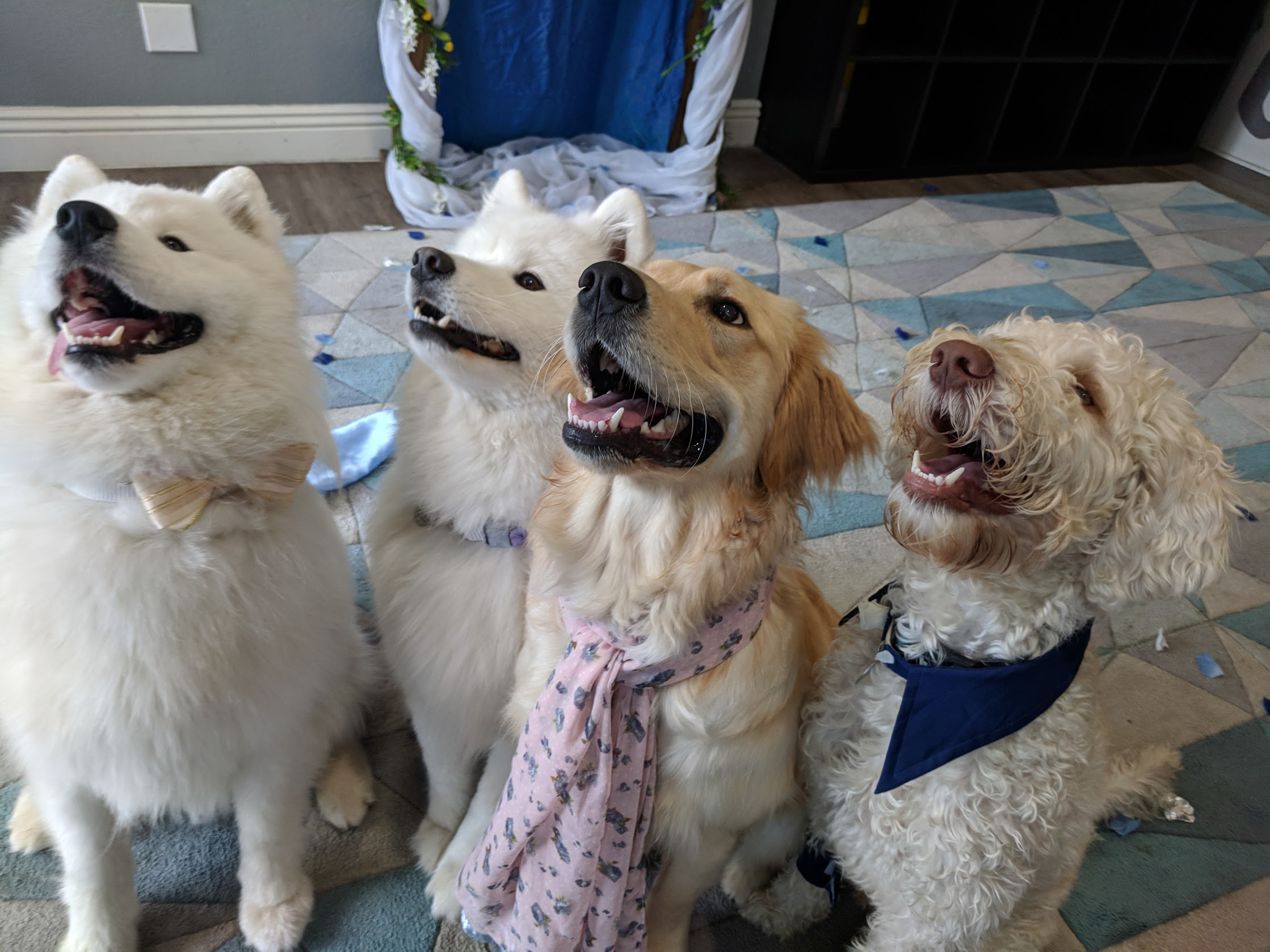 Matchmaking - Our matchmaking service is the key to introducing your pup to lifelong furry friends. At PlayBow, we recognize that there are just as many dog personalities as there are people personalities. To help each dog feel as comfortable as possible with his or her playmates, we keep playgroups small, and closely monitor each dog's body language. Rather than lump together all large dogs, and all small dogs, we get to know each dog's personality, who their best friends are, and play matchmaker.