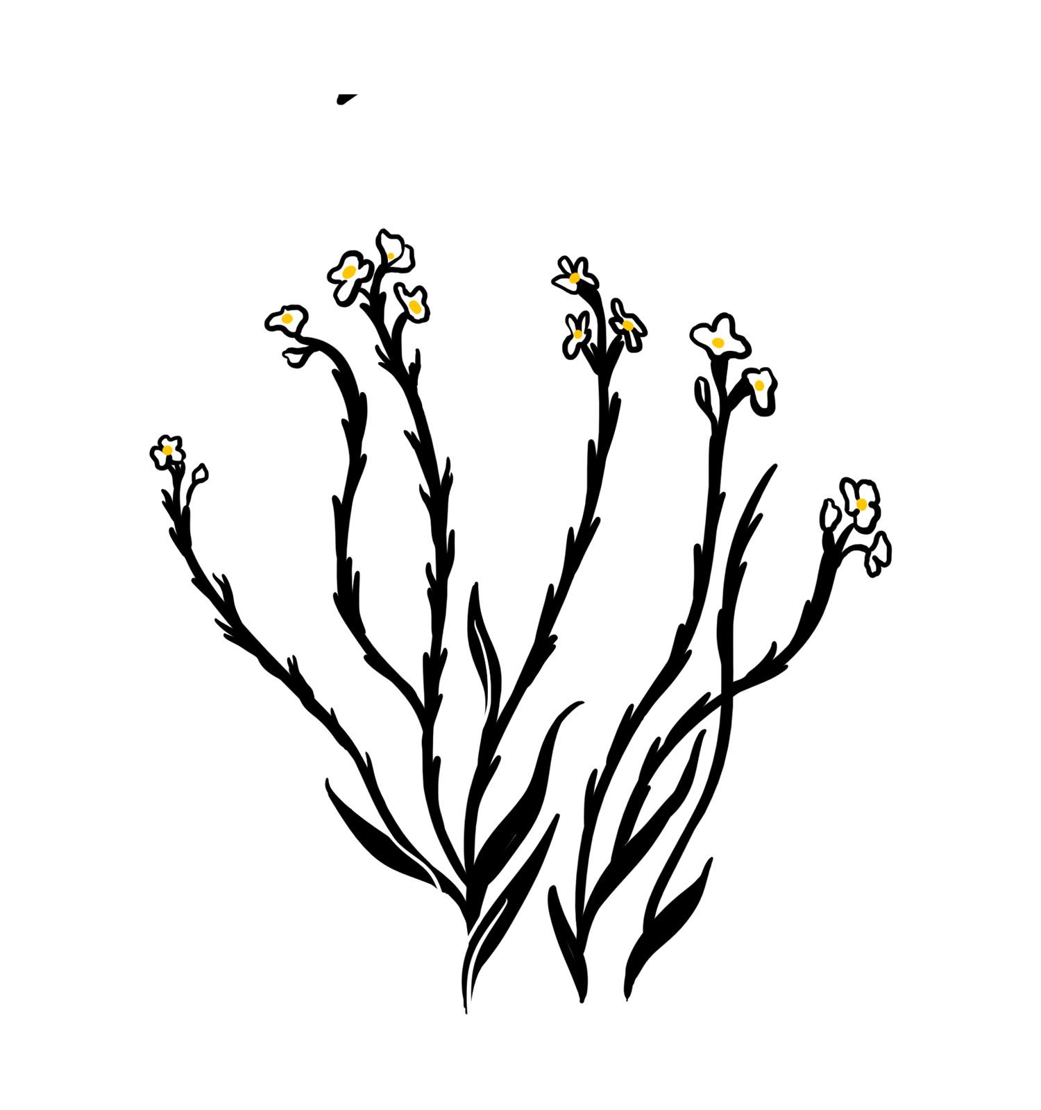 flower-03.jpg