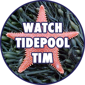 Tidepool Tim uncovers the secrets of the ocean through his documentation Maine sea life. See squid, clam necks, sea smoke rising from the cold Atlantic, and brittlestars.