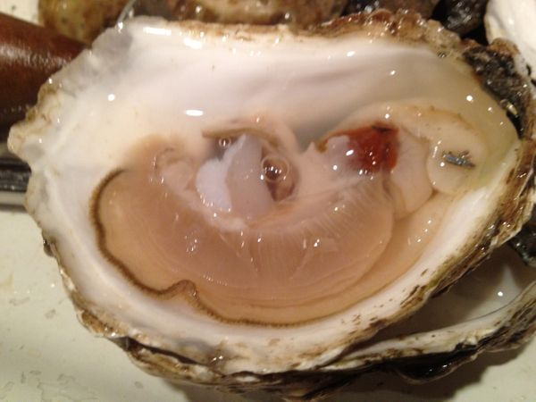 Oyster soft body tissue, or 'meat.'