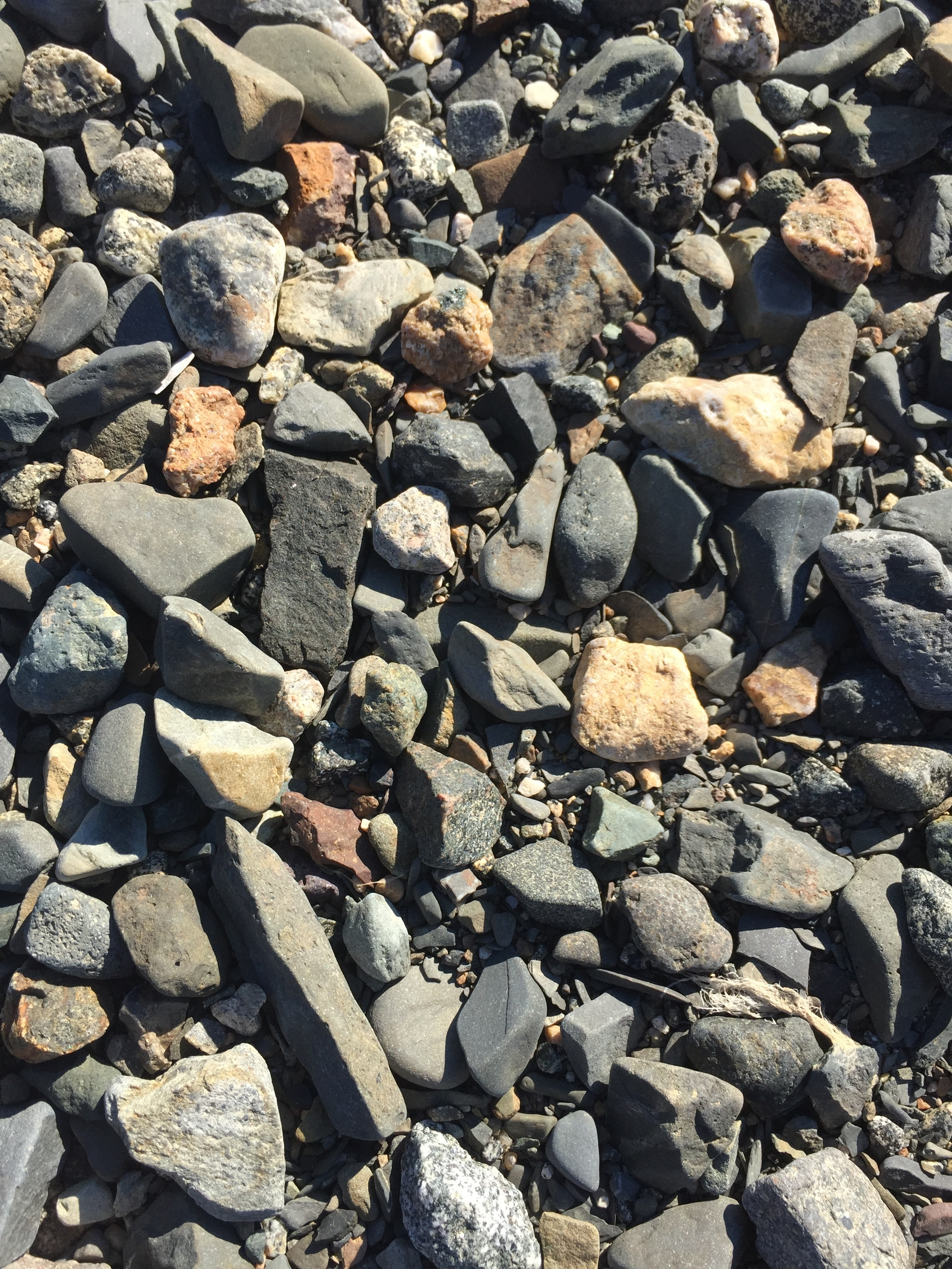 cobbly seabed