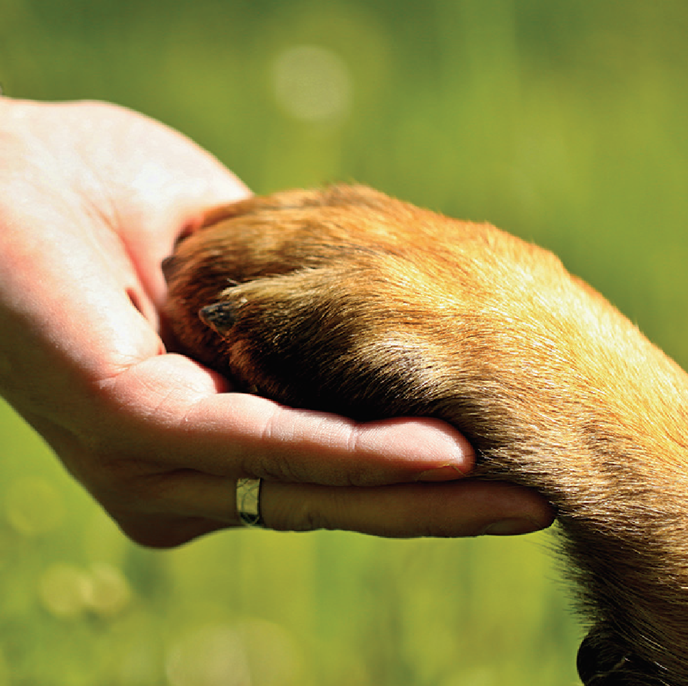 Image of dog paw in human in hand against a green background. BC SPCA Paw in hand.png