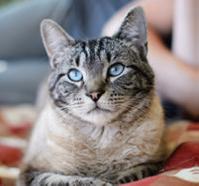 BC SPCA kitty.png