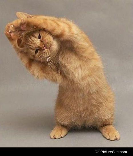 cat stretch.jpg