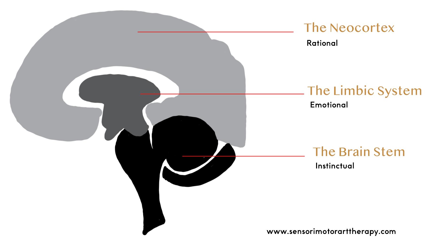 The Triune Brain.