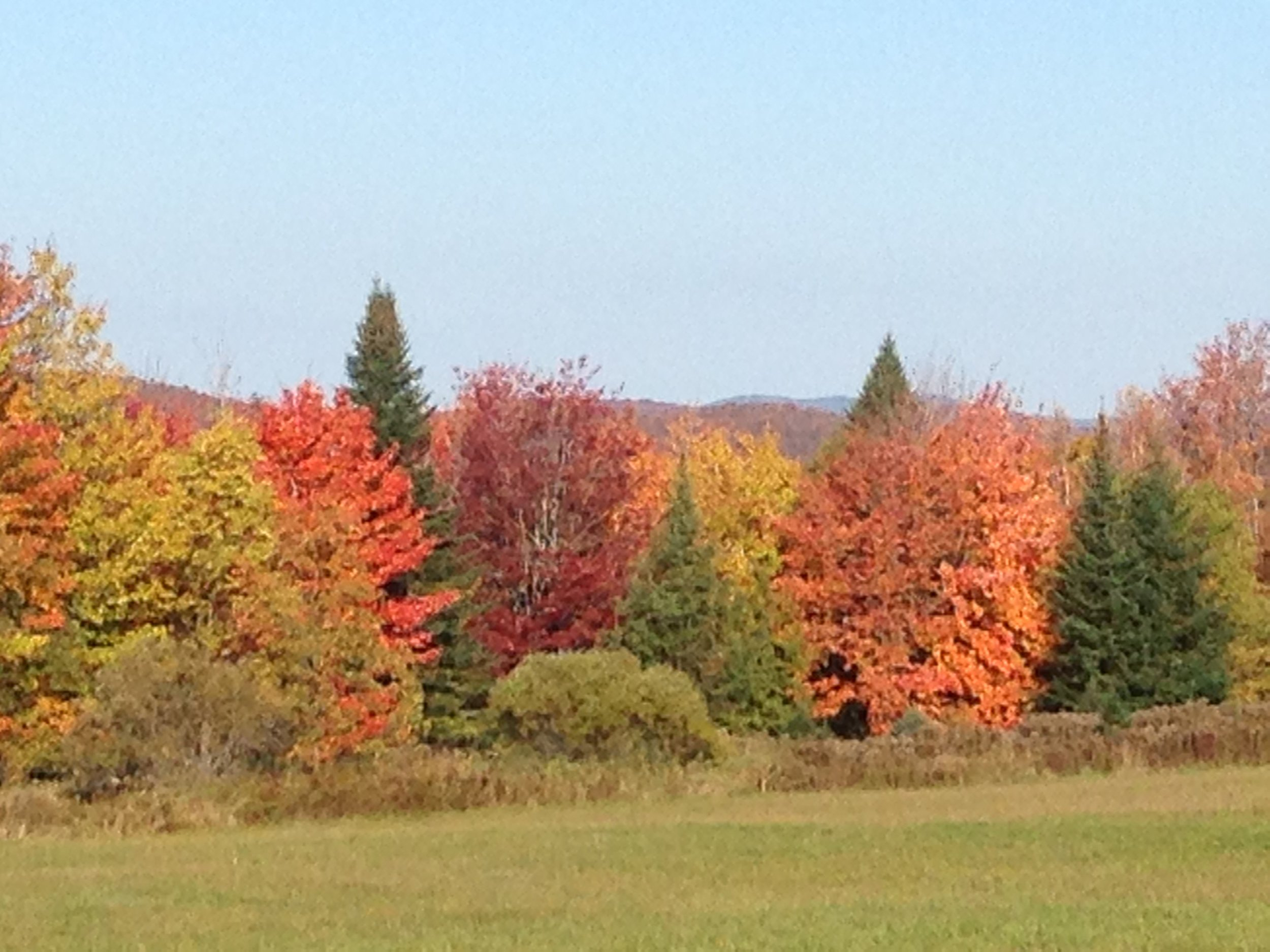 Fall at my Vermont farm.