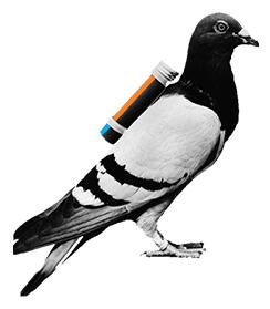 pigeon small.jpg
