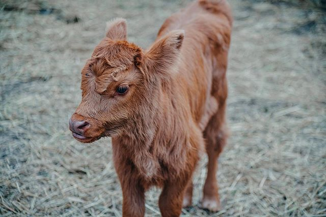 Zako Rancho's newest edition to the family :) Her name is Bunia, and she is 12 days old today! She will be getting lots of visitors this weekend! // Nowy członek rodzinę Zako Rancho! Ona ma na imię Bunia, i ma tylko 12 dni :) Będzie miała wielu gości w ten weekend! . . . . . #zakorancho #proemministries #outreachministry #bettertogether #bunia