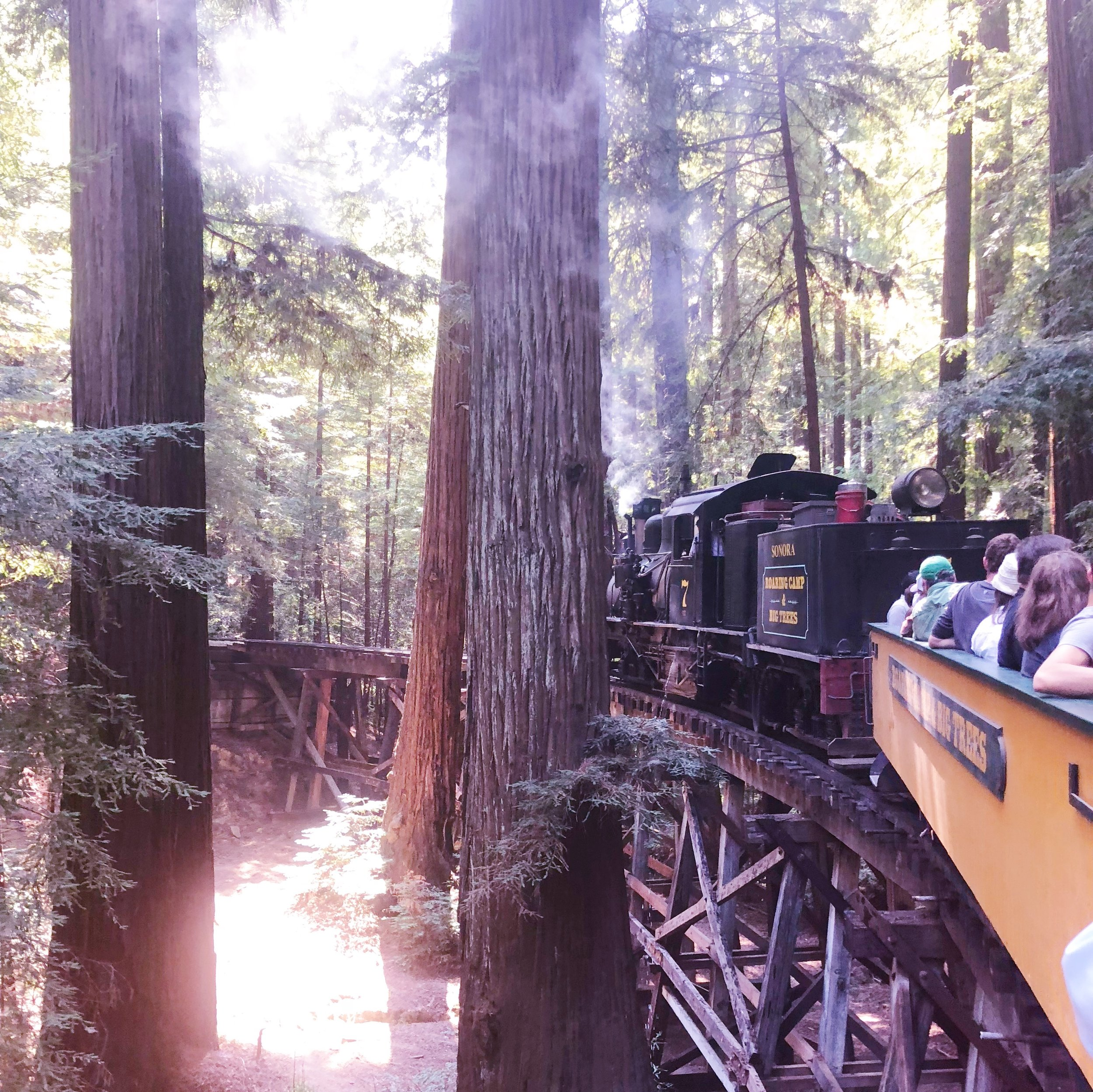 Roaring Camp Railroad Redwood Forest Steam Train Felton