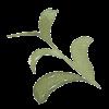 Web Design Leaf