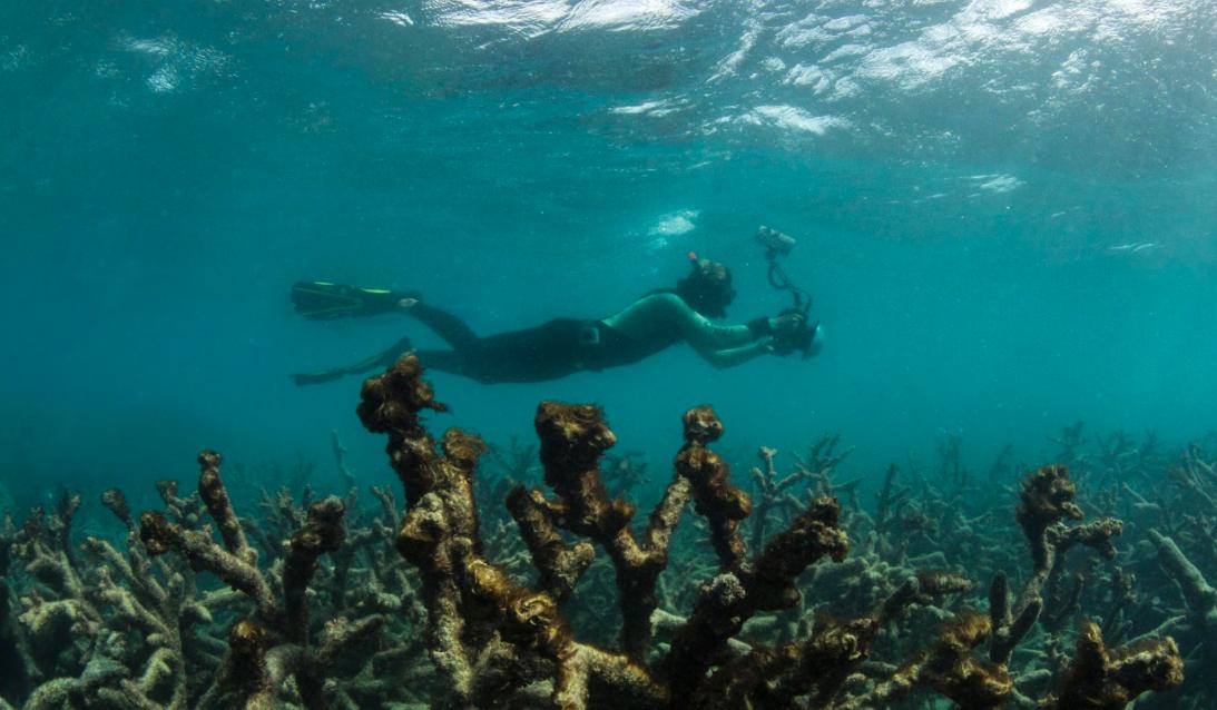 Lizard Island on Australia's Great Barrier Reef, 2016. Credit: The Ocean Agency/xl catlin seaview survey