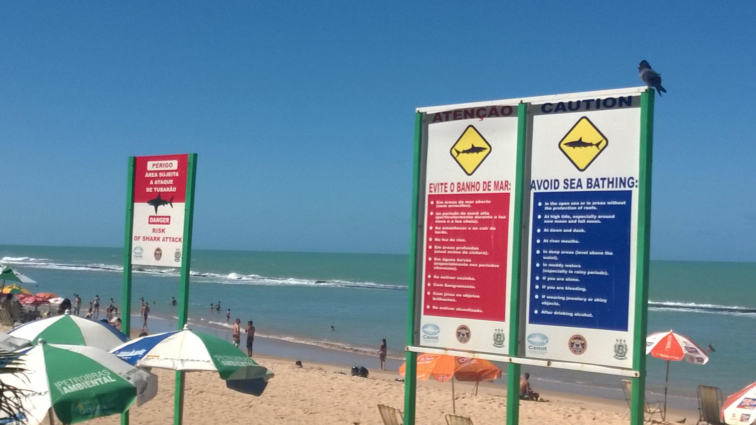 Shark Warnings in Recife