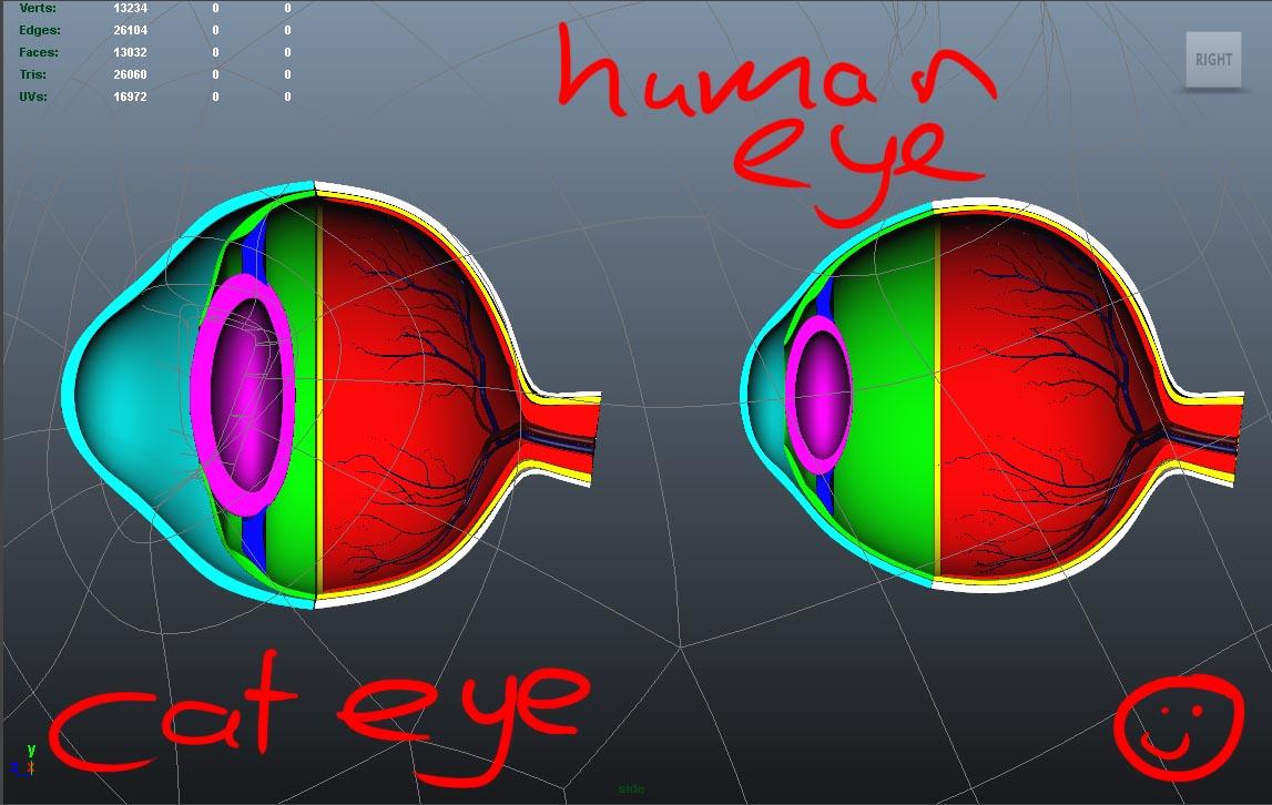 eyeComparison.jpg