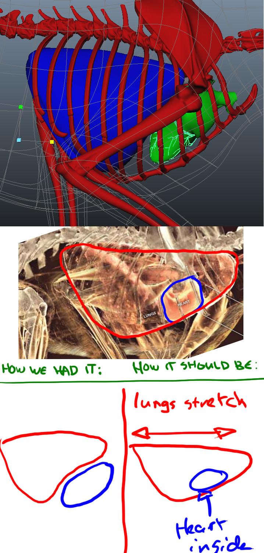 Lungs & Heart direction.jpg